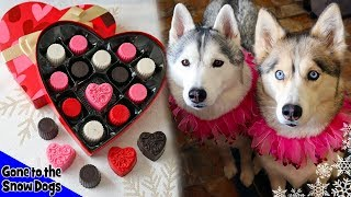 Valentines Day Chocolates For Dogs | DIY Dog Treats 113 | Carob Dog Treats
