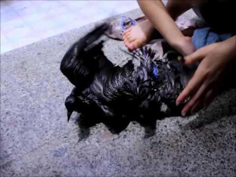 Veroshpiron hair treatment