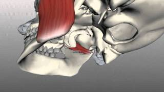 Muscles of Mastication - Anatomy Tutorial