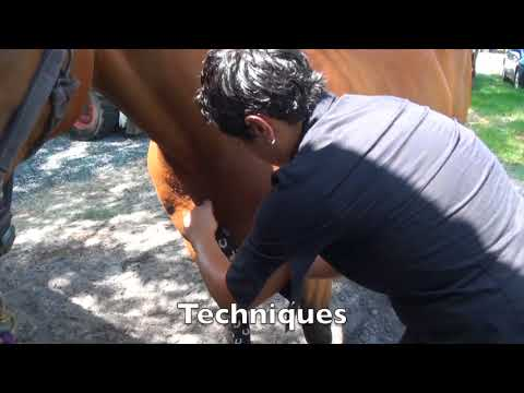 Equine Kinesiology Taping Certification Course - YouTube