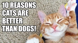 10 Reasons Why Cats are better than Dogs!
