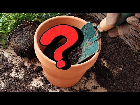 Что положить на дно горшка, чтобы растения росли как на дрожжах?