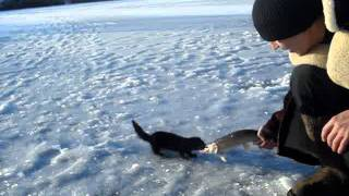 На рыбалке норка