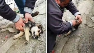 Man That Abandons His Terrified Dog At The Park Goes Ballistic Once Good Samaritan Confronts Him