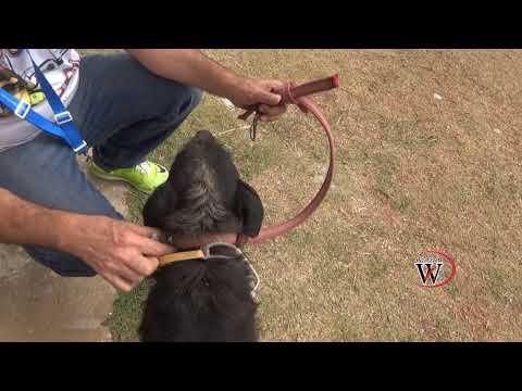 Vídeo Emocionante equipe Wanzam Drone Resgata Cachorro abandonado para Morrer
