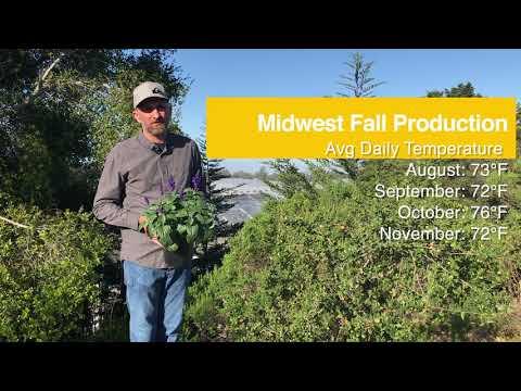 Tech Talk - Mysty Salvia for Fall Retail Sales thumbnail