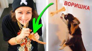 Обманула собак! Розыгрыши над собаками: исчезающий хозяин, фокусы с едой! Розыгрыш пошел не плану