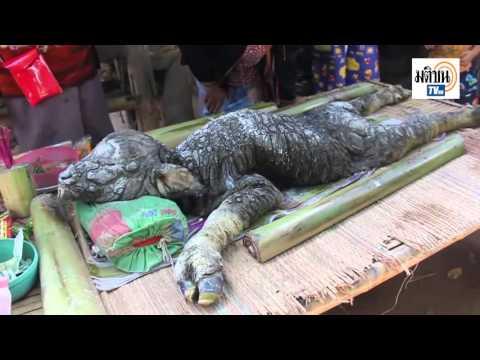 泰國部落誕生了這隻「牛和鱷魚混血」的奇異生物