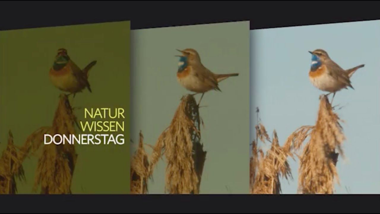 Promotrailer Natur ORF III