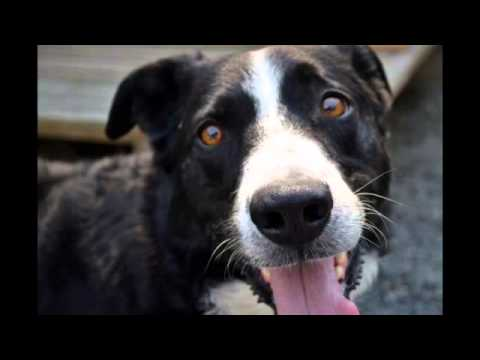 Buster, an adopted Border Collie Mix in Moscow, ID