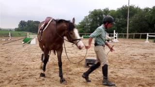 Three Common Annoying Young Horse Habits