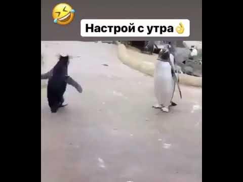 Жизнерадостный пингвин