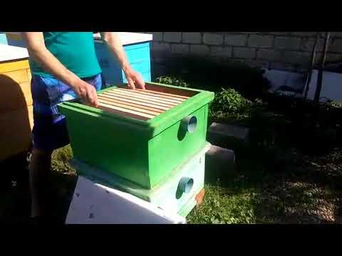 УХОДИМ ОТ РОЕНИЯ- Налёт на МАТОЧНИК с последующим объединением пчелосемей перед ГВ.