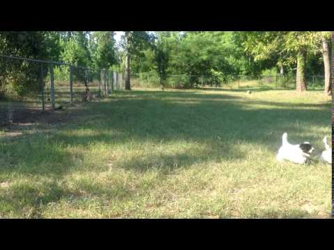 Video of pups July 2016