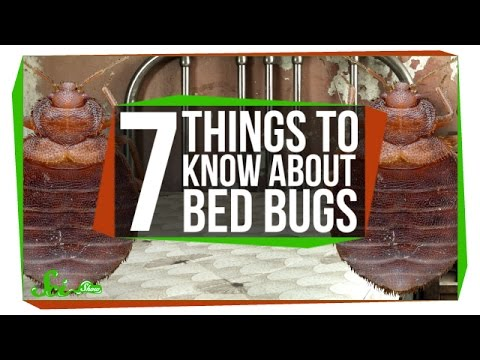 Everything You Need To Know About Bed Bugs, In One Video