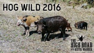Airgun Hog Hunting | Hog Wild 2016 Part 1