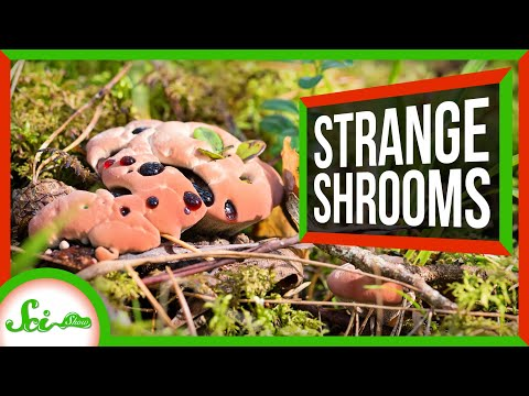 6 Weird Mushrooms (And Other Fungi)