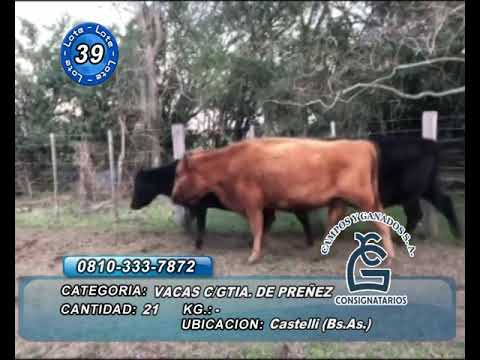 Lote vaca CGP - Castelli Bs AS