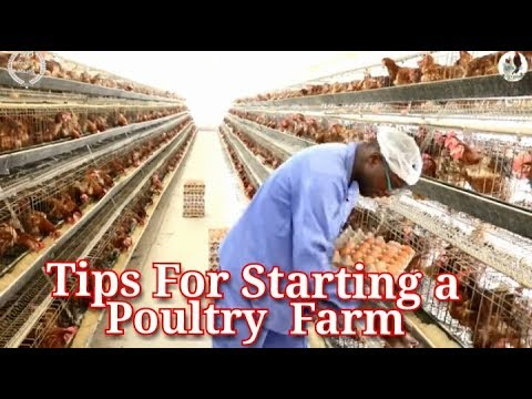 , title : 'Tips for Starting a Poultry farm and Business Before Quiting your job / Chicken rearing in Kenya