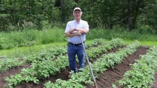 How To Mound Potatoes