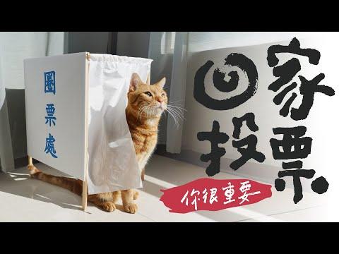 連貓咪都知道要投票,那你呢?