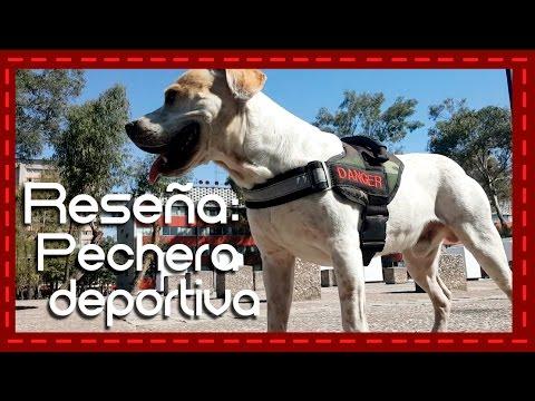 Reseña: Pechera deportiva para perro