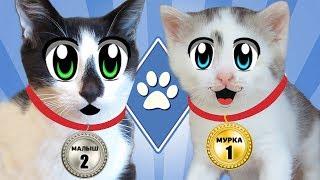 ЧЕЛЛЕНДЖ ДЛЯ КОТОВ! кот МАЛЫШ и кошка МУРКА и УРОК ГИМНАСТИКИ? Школа котов Для детей kids children