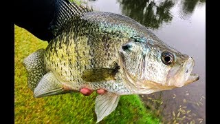 Catching GIANT Fall CRAPPIE! Tips For Targeting Big Slabs.