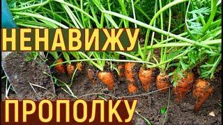 Как сажать морковь в огороде весной, урок - Видео онлайн