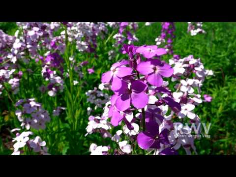 RWV: Flowers 2015 Spring Season in America - 06/06/2015