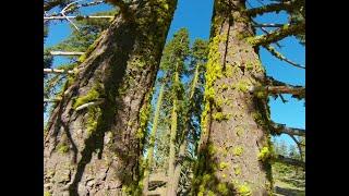 Lake Tahoe Trip (FPV FREESTYLE)