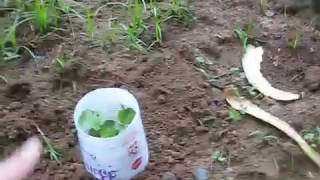 Don't Kill Roly Poly Pill Bugs You Need Them In Your Garden Here's What To Do Instead