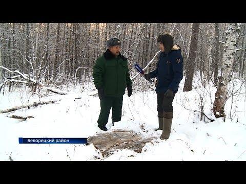 За «чёрными лесорубами» в Башкирии будут следить из космоса: специальный репортаж «Вестей»
