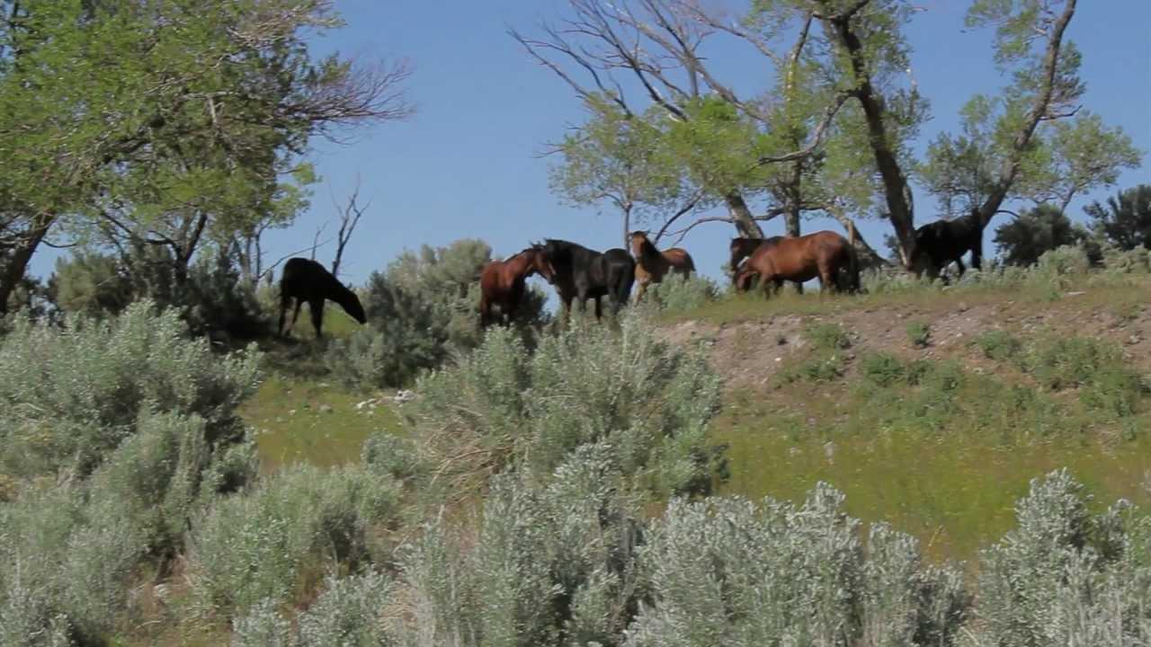 Meeting America's Mustangs