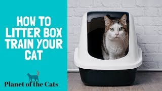 How To Train Your Cat To Use The Litter Box?