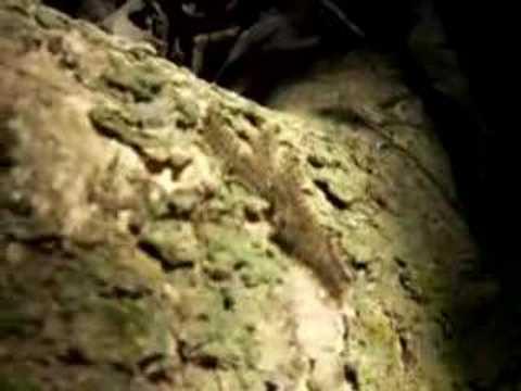 Die Vergiftung von den Würmern beim Kater