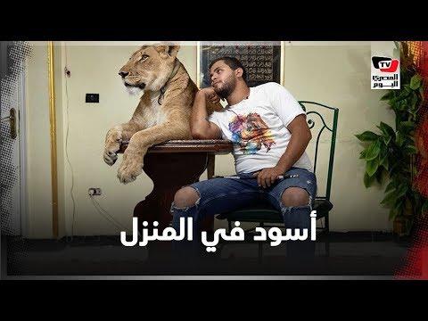 فقرة الأسود مع أشرف الحلو.. عروض في البيت «علشان السيرك قافل»