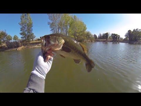1.5lber LMB Community Center Pond – San Jose Bass Fishing 6.16.2014