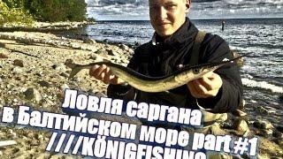 Ловля саргана на балтийском море калининград