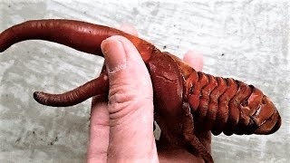 17 Weird Scary Insects