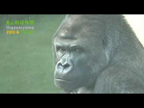 【東山動植物園公式】シャバーニ誕生日