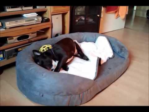 Der Karlie bekommt ein orthopädisches Bett