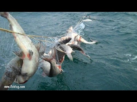 Whitefish fishing Lake Michigan Fish Tug In Door County,Wi. http://www.fishtug.com