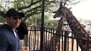 Giraffe Feeding at the Houston Zoo (February 17, 2019)