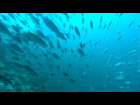 Swarm Fishes