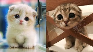 Baby Cats - Cute and Funny Cat Videos Compilation #8 | Aww Animals