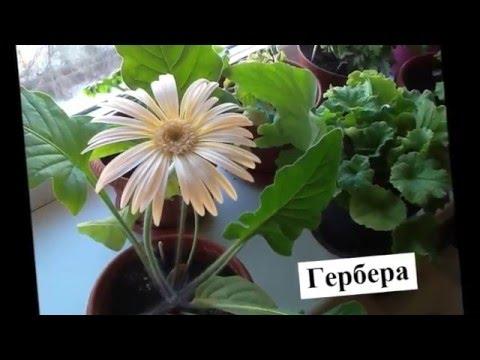 Лучшие комнатные цветы  Названия  красивых цветов и их фото