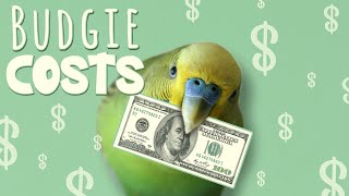 How Much Does it COST to Keep a Budgie?
