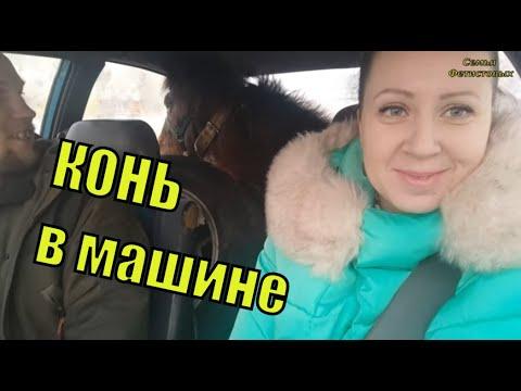 КОНЬ в машине. Поменяли коня на тёлку/ Семья Фетистовых