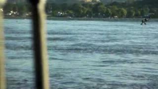 Clear Lake Carp Spawn.avi